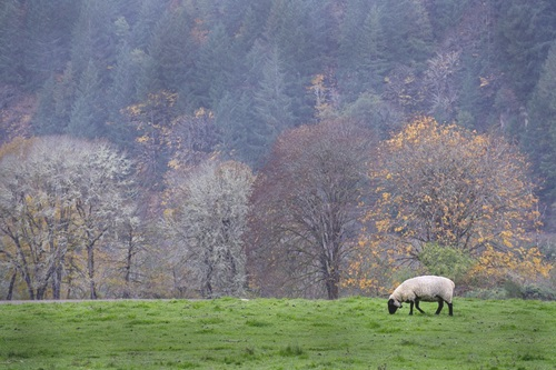 sheep-1279444_960_720