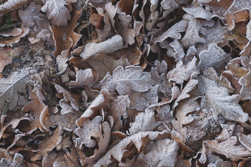 frost-2451135_960_720