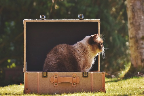 cat-2149791_960_720