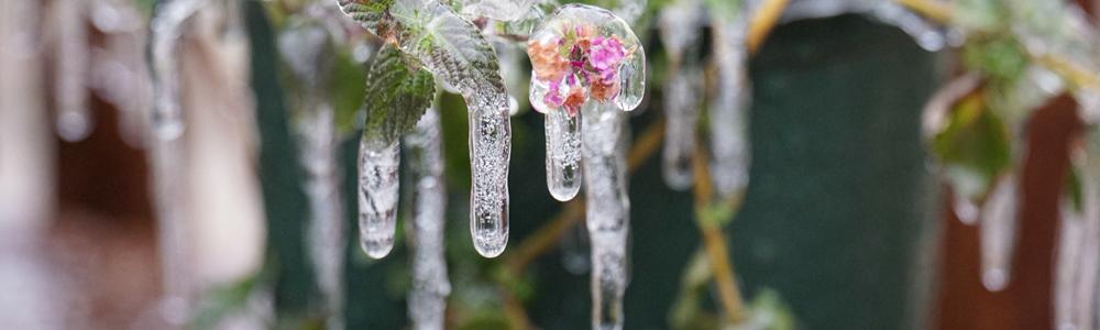 草木にできた氷柱