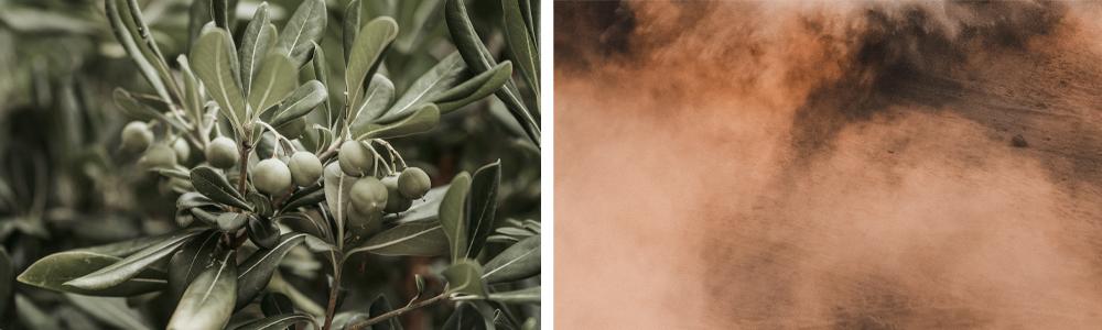 オリーブの木と土埃